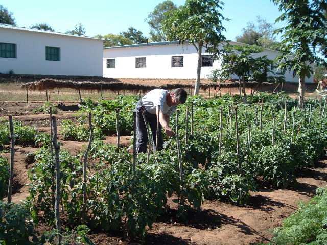 32 2006 Pomme de terre, haricots, tomates, maïs, soja expérimentat. des Soeurs